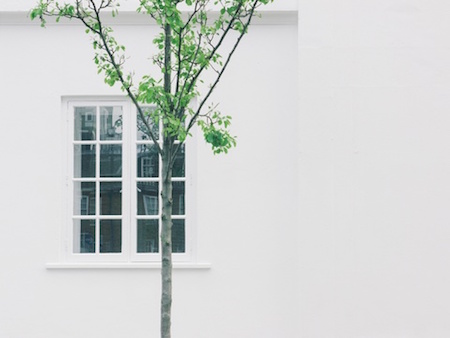 tree-branch-window-house