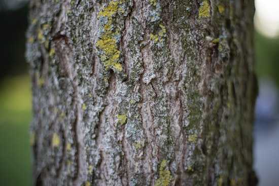 tree-bark-nature