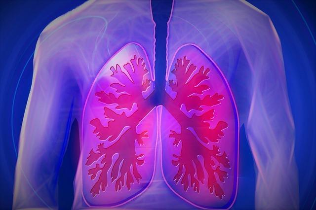 upper-body-lungs-human
