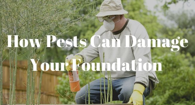 How Pests Can Damage Your Foundation
