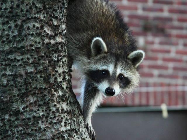 animals causing foundation damage texas