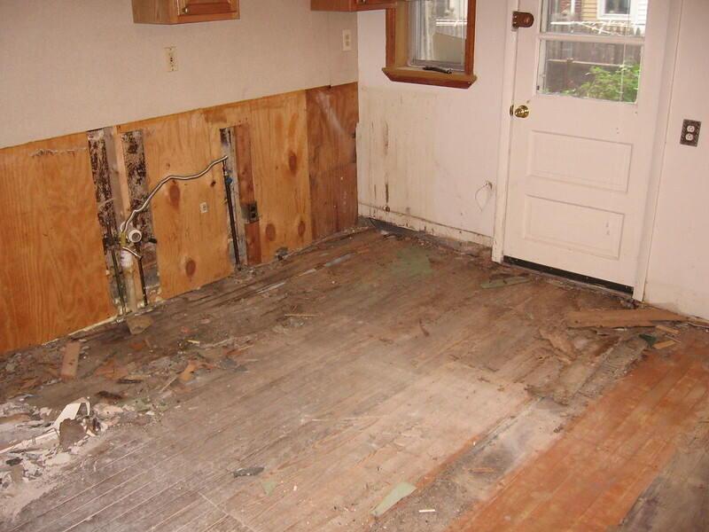 carpenter ants foundation repair texas