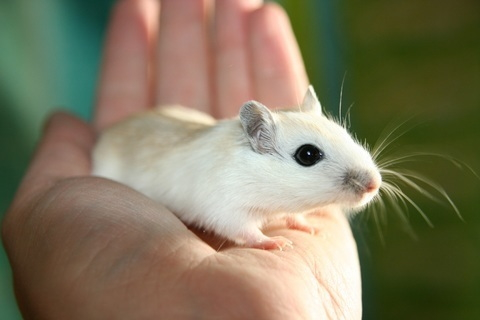 rodents foundation repair texas