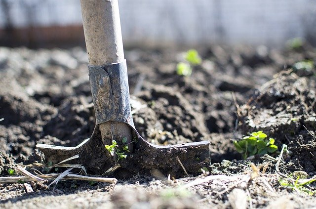 hole-digging